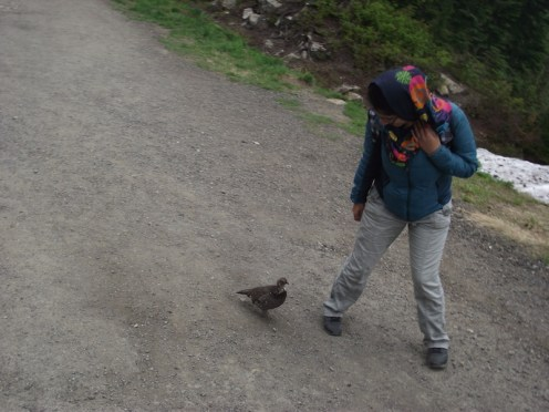 Grouse Mountain 2017: Sepideh with a grouse