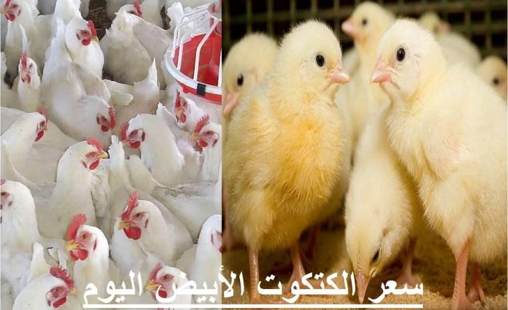 أسعار الدواجن الثلاثاء.. سعر الفراخ اليوم 4 مايو وسعر الكتكوت الابيض وأسعار بورصة الدواجن 4
