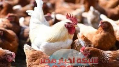 Photo of شبكه أخبار مصر ترصد لكم أسعار الدواجن اليوم الاحد ٩ اغسطس 2020