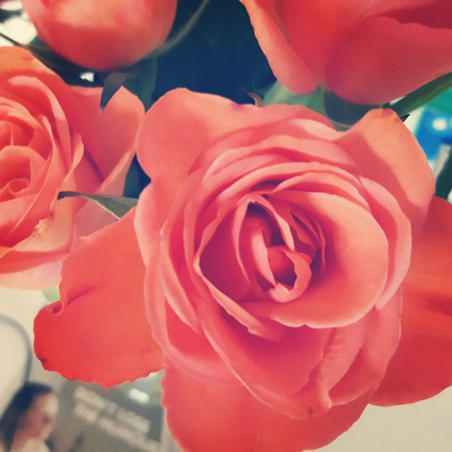 Rosen, so schöne Rosen