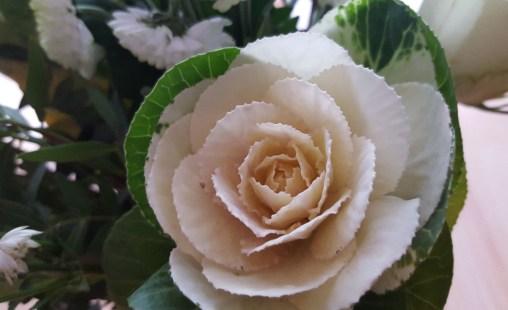 Ob man die Rosen essen kann? :)
