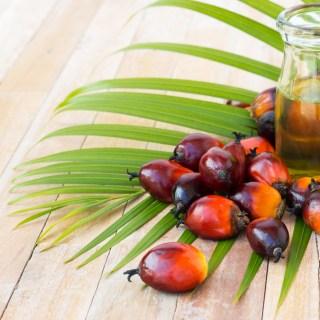 История пальмового масла