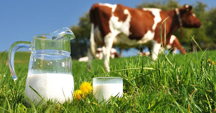 Нужно ли давать ребенку коровье молоко?