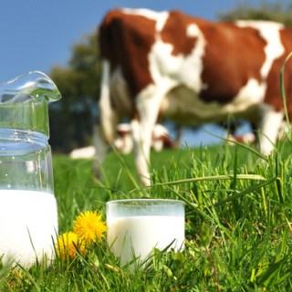 Американская Академия Педиатрии о коровьем молоке