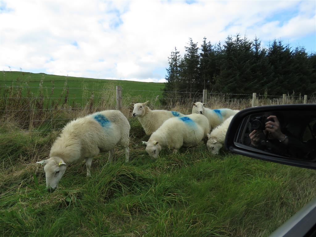 Welsh traffic jam