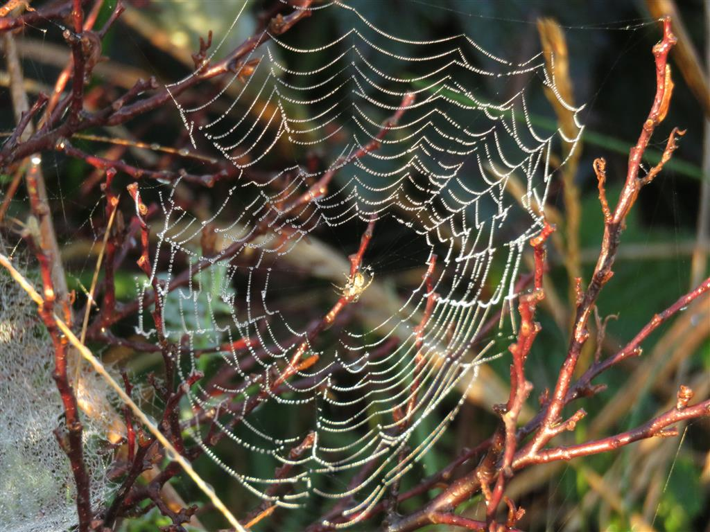 Are you the spider or the fly? How to avoid being caught and bound by the World Wide Web