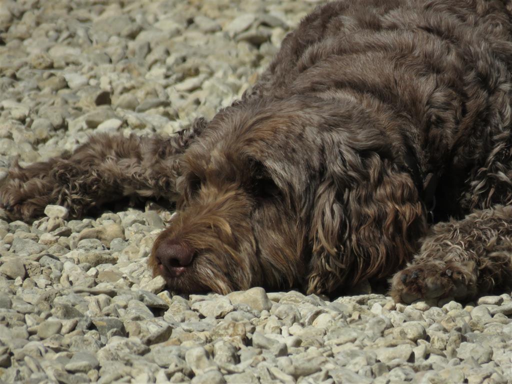 Tired pup, Bradford on Avon, Wiltshire