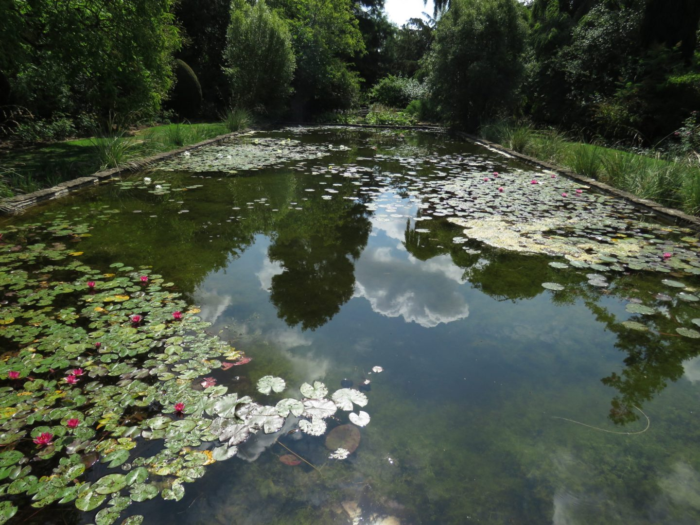 Pond reflections at the National Trust's The Courts, Holt, Wiltshire