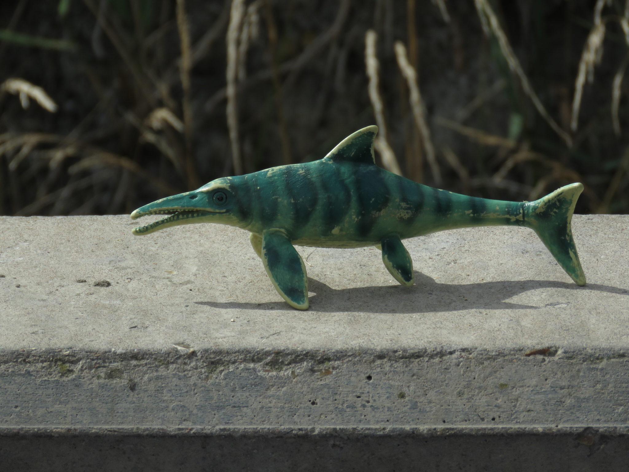 Ichthyosaur Model
