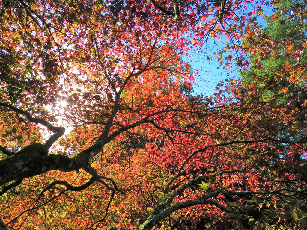 Autumn Colours at Westonbirt Arboretum