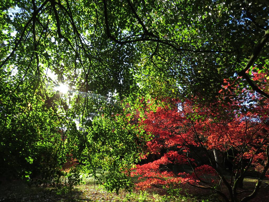 Autumn colour at Westonbirt Arboretum, Gloucestershire