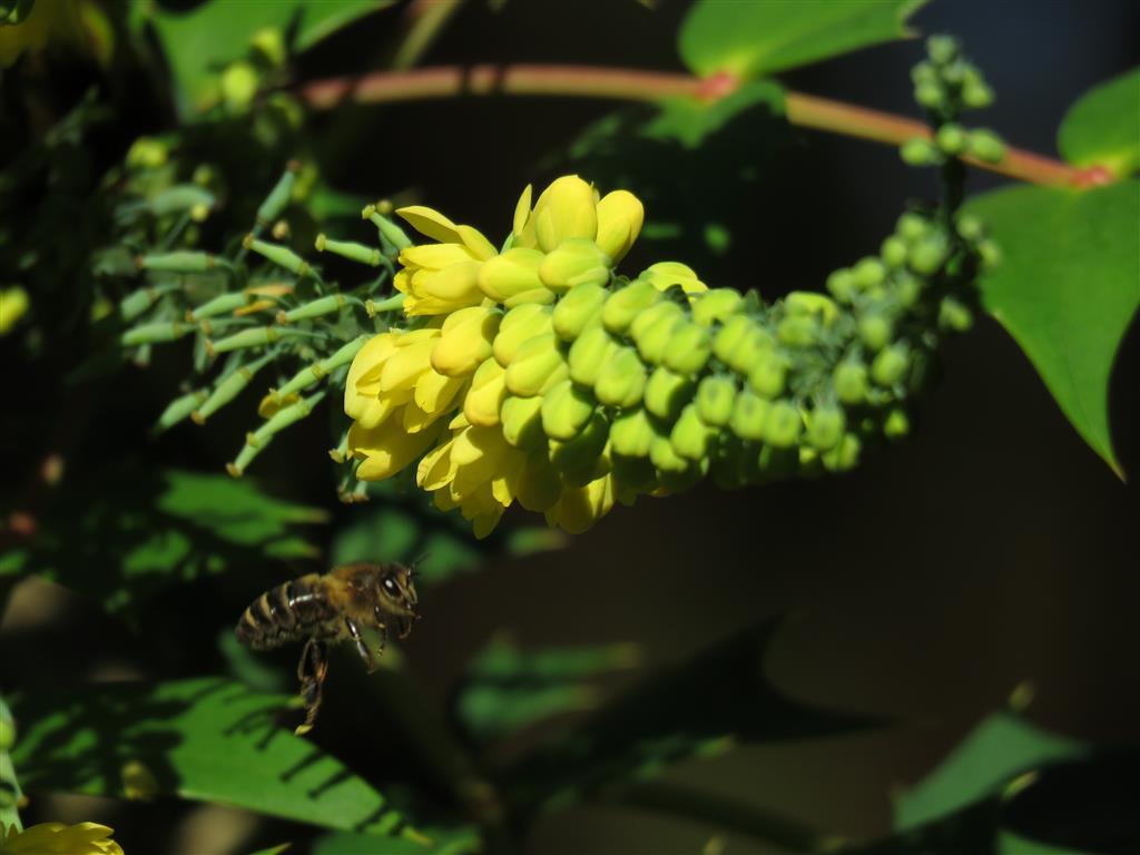 Bees at Westonbirt Arboretum, Gloucestershire