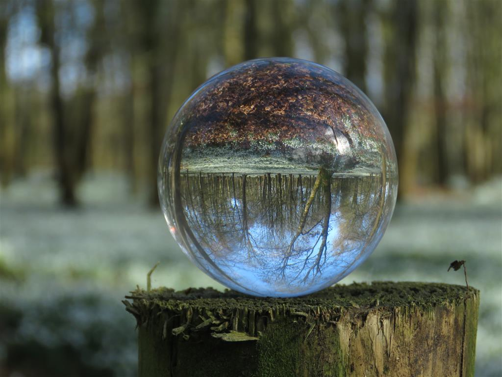 Photo globe in the snowdrop woods, Welford Park