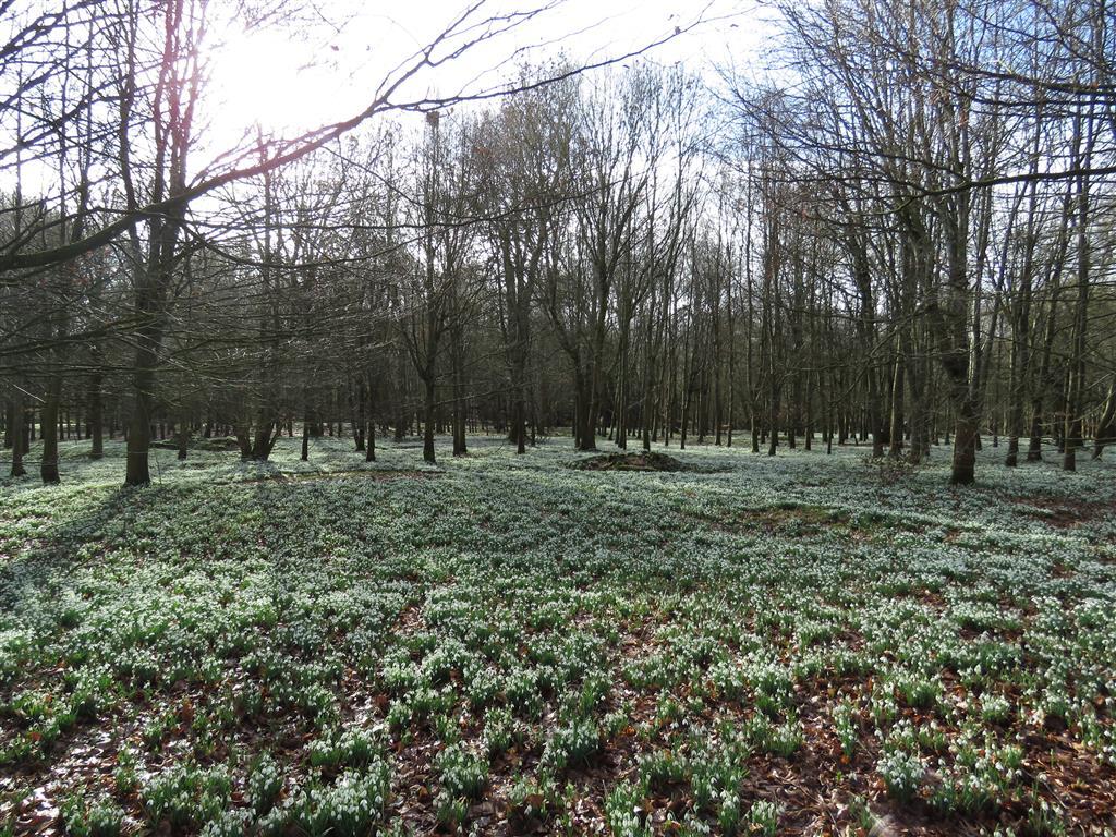 Beech Woods at Welford Park, Berkshire