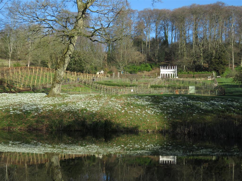 Snowdrops at Painswick Rococo Garden, Painswick, Cotswolds
