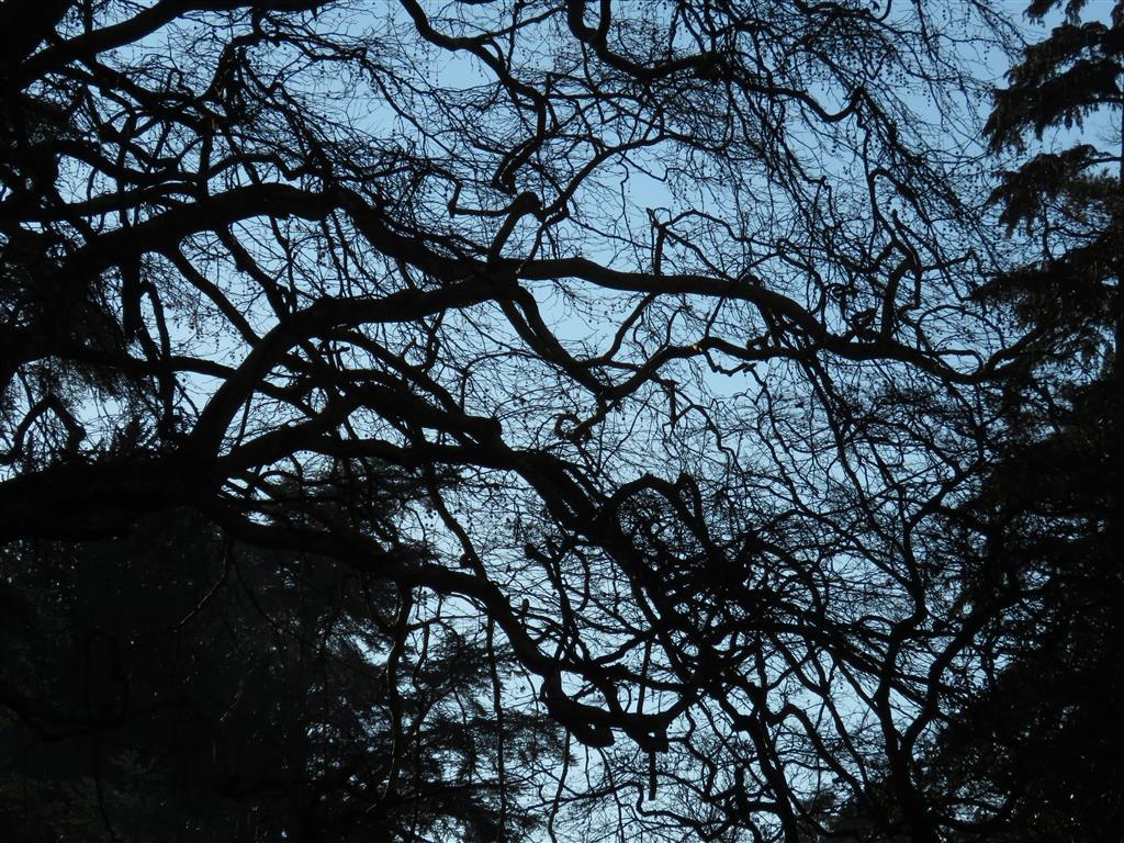 Winter branches, Westonbirt Arboretum