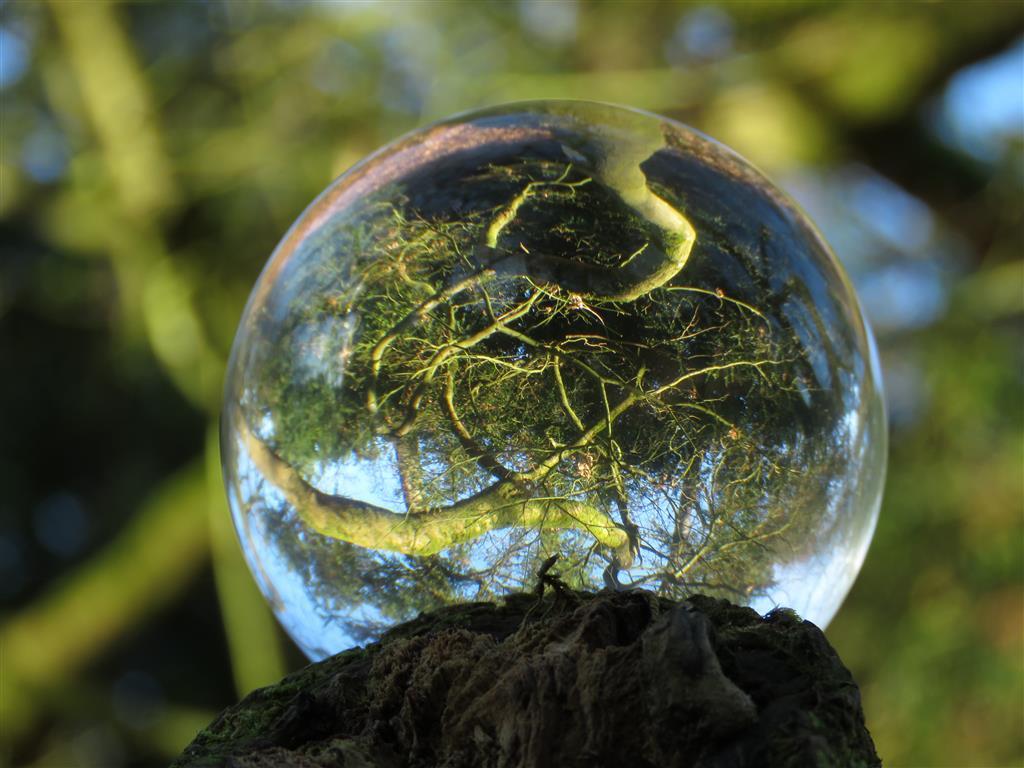 Photo globe, Westonbirt Arboretum