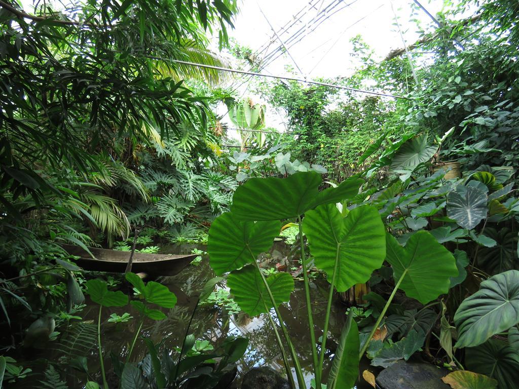 Visiting the Living Rainforest, Berkshire