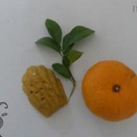 <!--:de-->Mildes Shampoo mit Orangen<!--:--><!--:fr-->Shampoing doux à l'orange<!--:-->