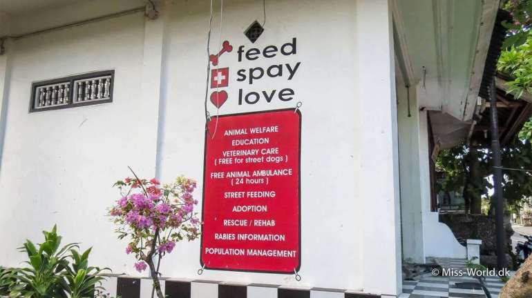 Feed Spay Love - Animal Welfare Bali (Ubud)