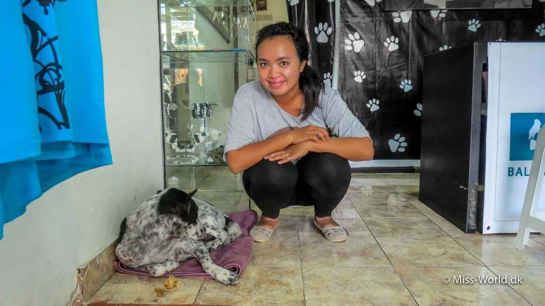 Bali dog in the BAWA shop in Ubud Bali. They are doing such an amazing job for the dogs and animals in general in Bali.