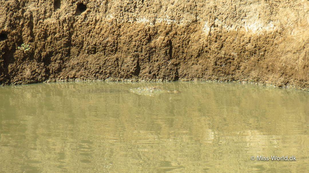 Man skal ikke bade i Udawalawe National Park