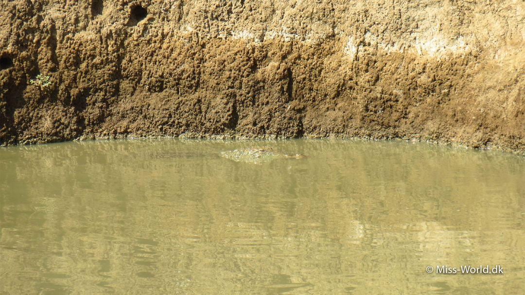 Crocodile Udawalawe National Park Sri Lanka
