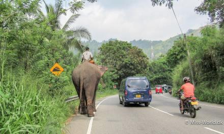 Transport i Sri Lanka • Sådan rejser du billigst, hurtigst og nemmest rundt