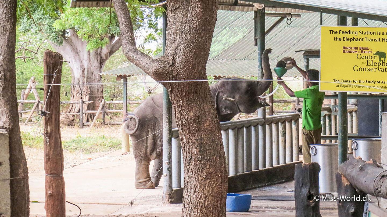 Elephant Transit Home i Udawalawe, Sri Lanka