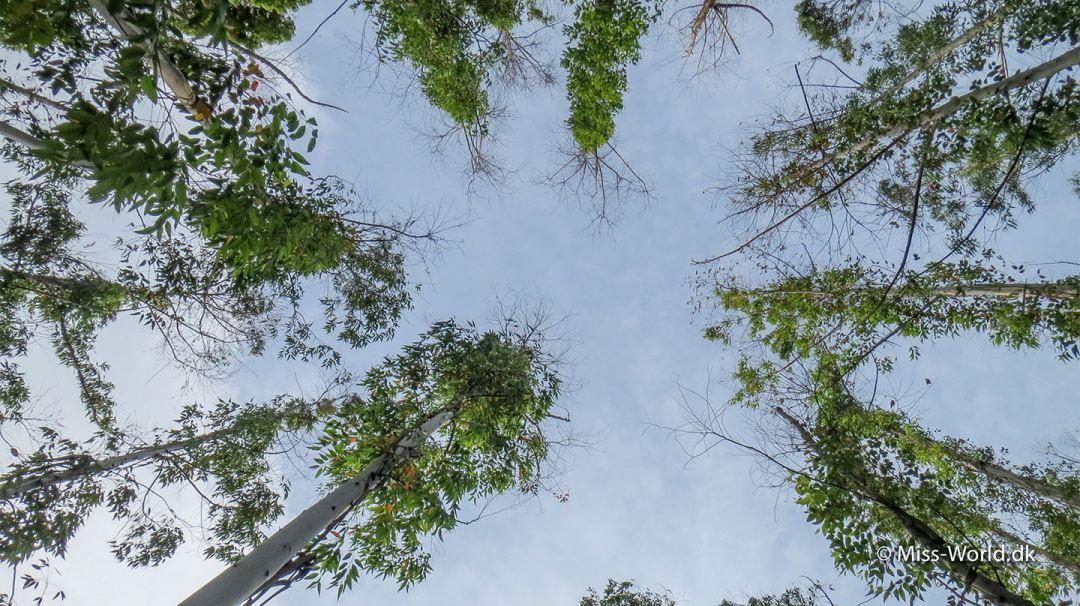 Sådan ser det ud når man kigger op, på vejen mod toppen af Ella Rock