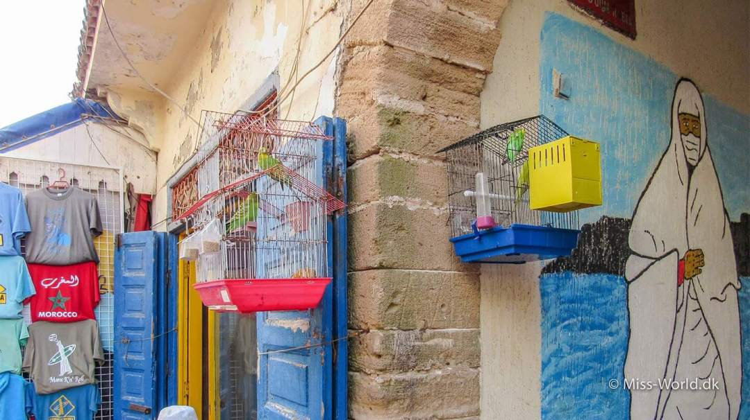Budgies in small cages - Essaouira Medina Morocco