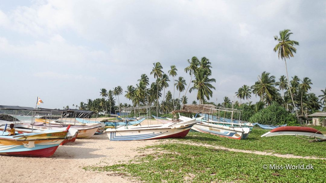 Fiskerbåde i Hikkaduwa Sri Lanka