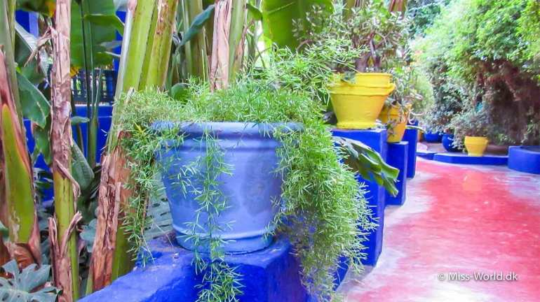 Majorelle Yves Saint Laurent Marrakech
