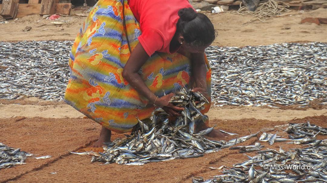 Negombo Fish Market Sri Lanka