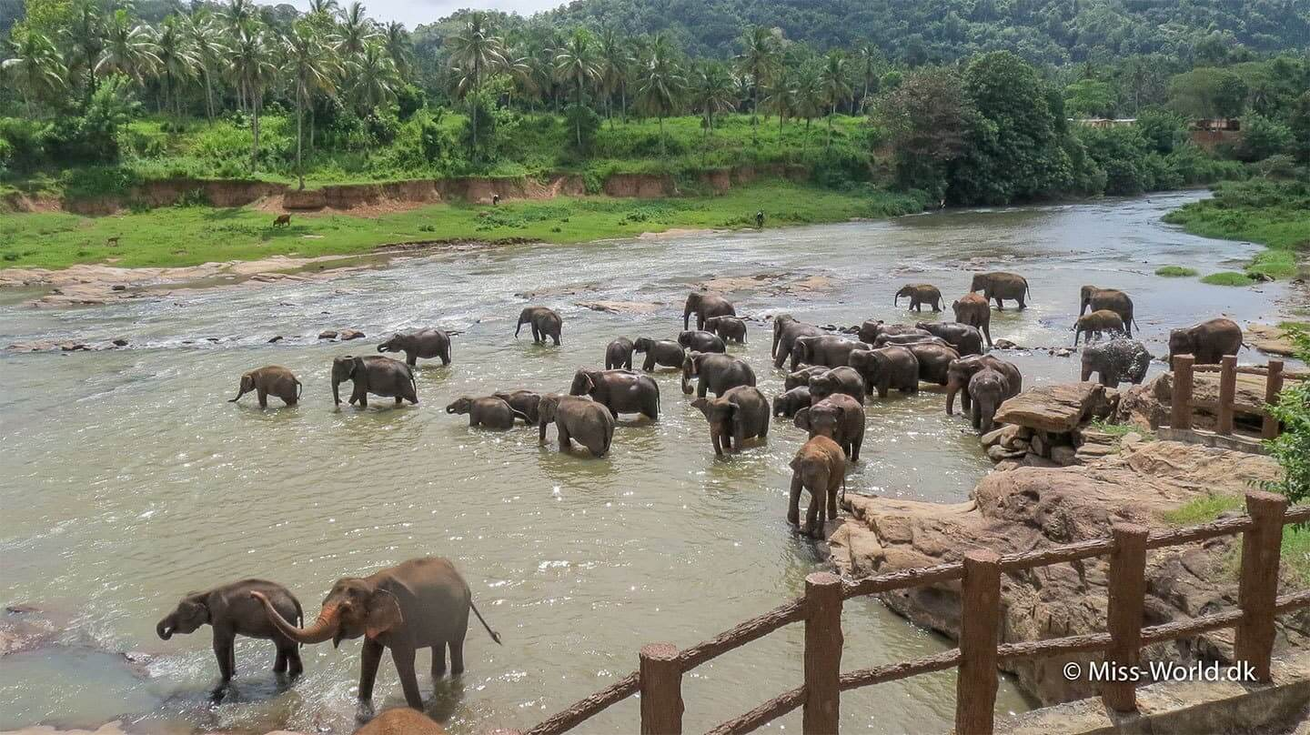 Pinnawala Elephant Orphanage i Sri Lanka