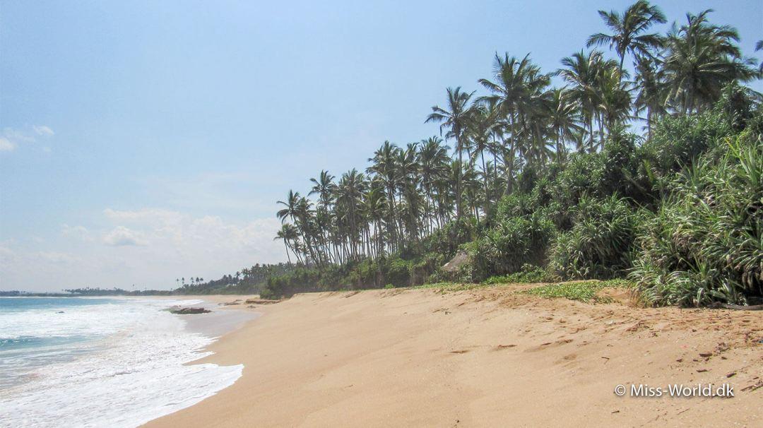 Rekawa Beach Sri Lanka