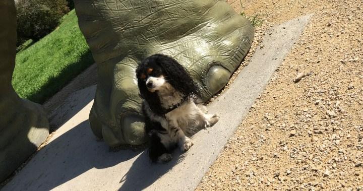 Mein Freund der Dino