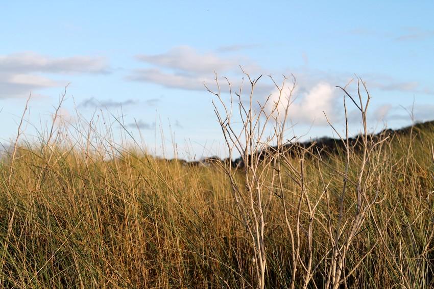 Entre les dunes 5