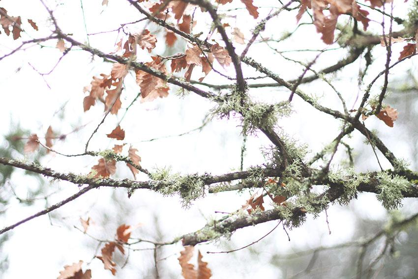 Balade de Noël et fin d'automne - Slow life - Miss Blemish