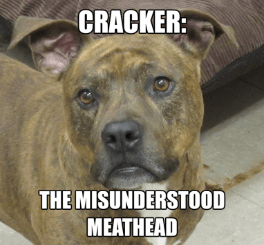 Cracker - Misunderstood Meathead