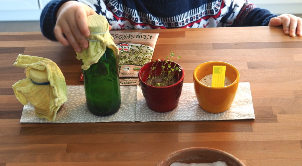 Samen und Gemüse - Buch Kinder Naturwerkstatt gärtnern mit Kindern