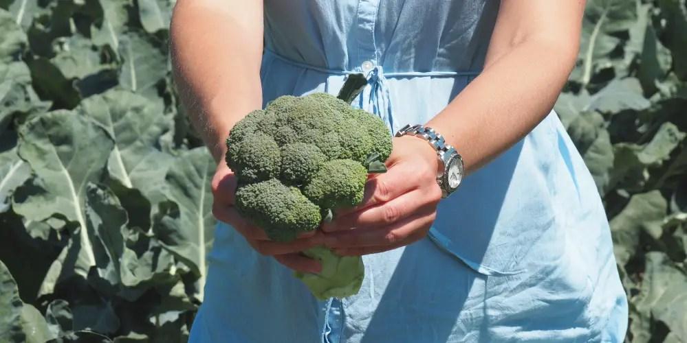 gesunde ernährung schwangerschaft broccoli schwanger miss broccoli, mamablog, 1000 tage, tipps, verbotene lebensmittel, erlaubt,