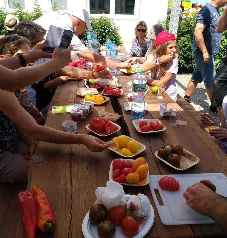 Gewächshaus führung tomaten hummeln kinder familien