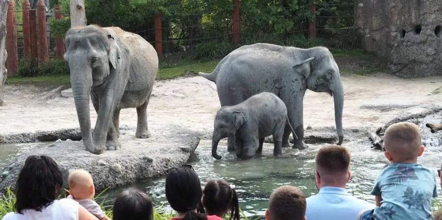 Zoo Zürich, Züri Zoo, Ausflugstipp, Tagesausflug, familie, kinder, mamablog, schweiz, ferien, mobiliar, rabatt, kooperation