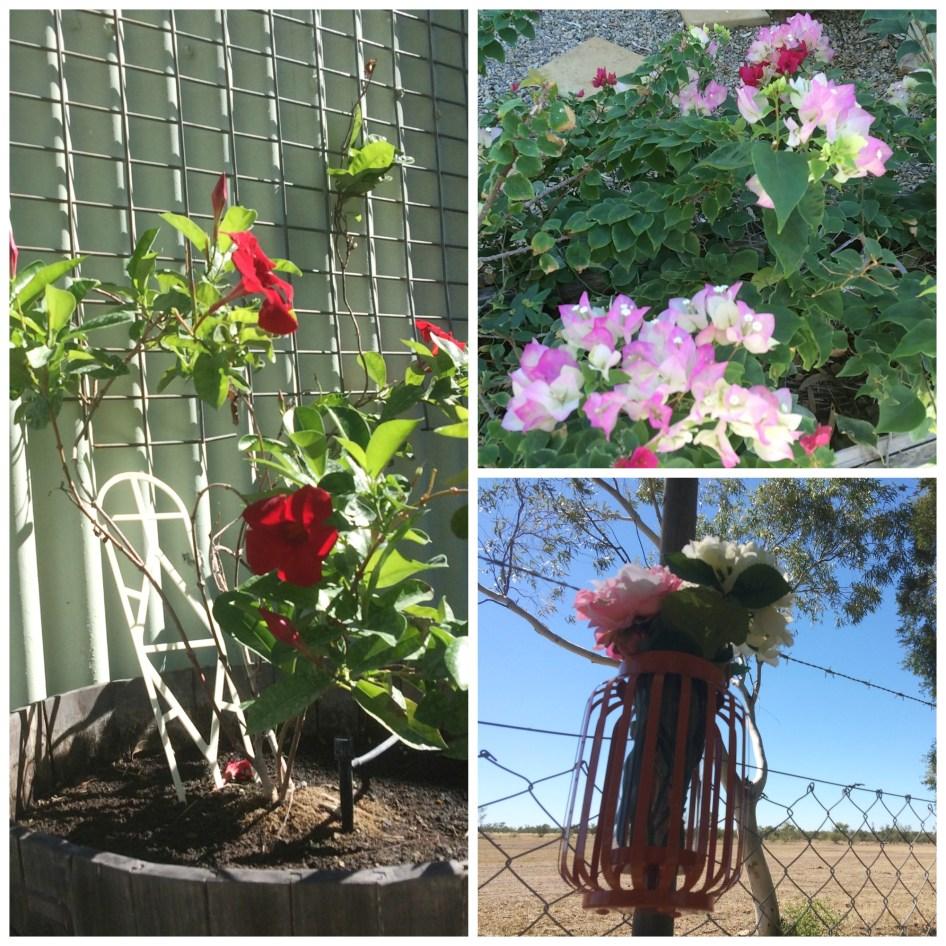 Shelly's Garden
