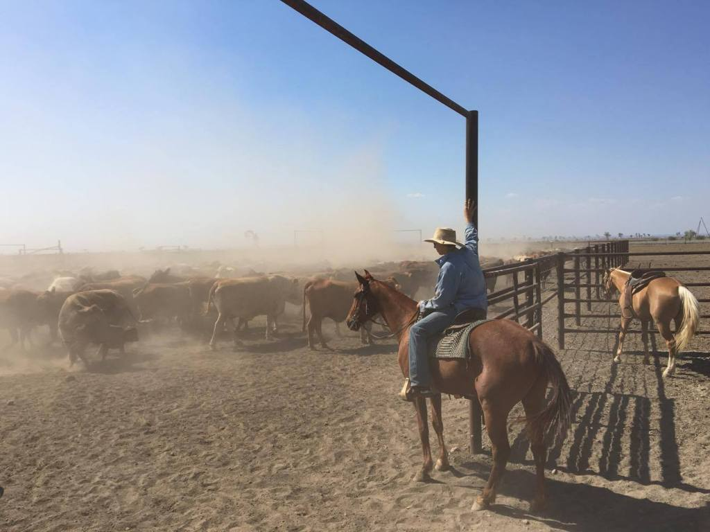 Outback Cattle Station – Horses, Cows & Dust