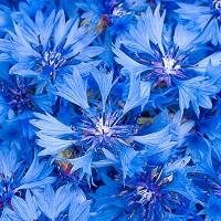 Langage des fleurs rencontre