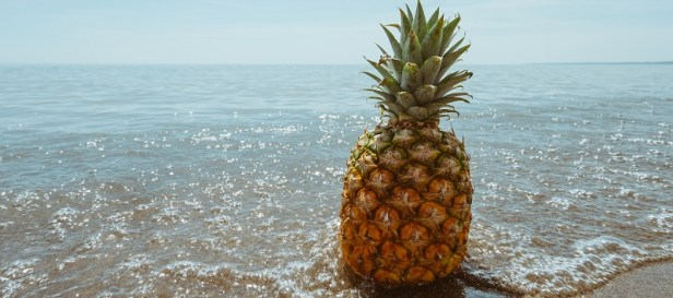 ananas conseil entretien