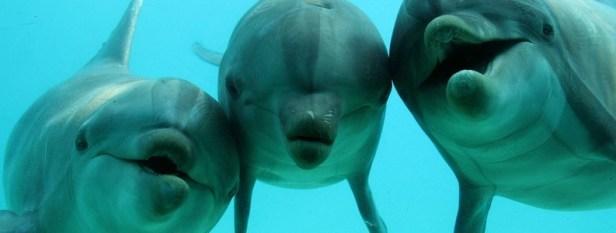 Portrait du dauphin