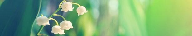 Muguet symbole langage des fleurs